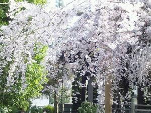 玉蔵院20120406.JPGのサムネール画像